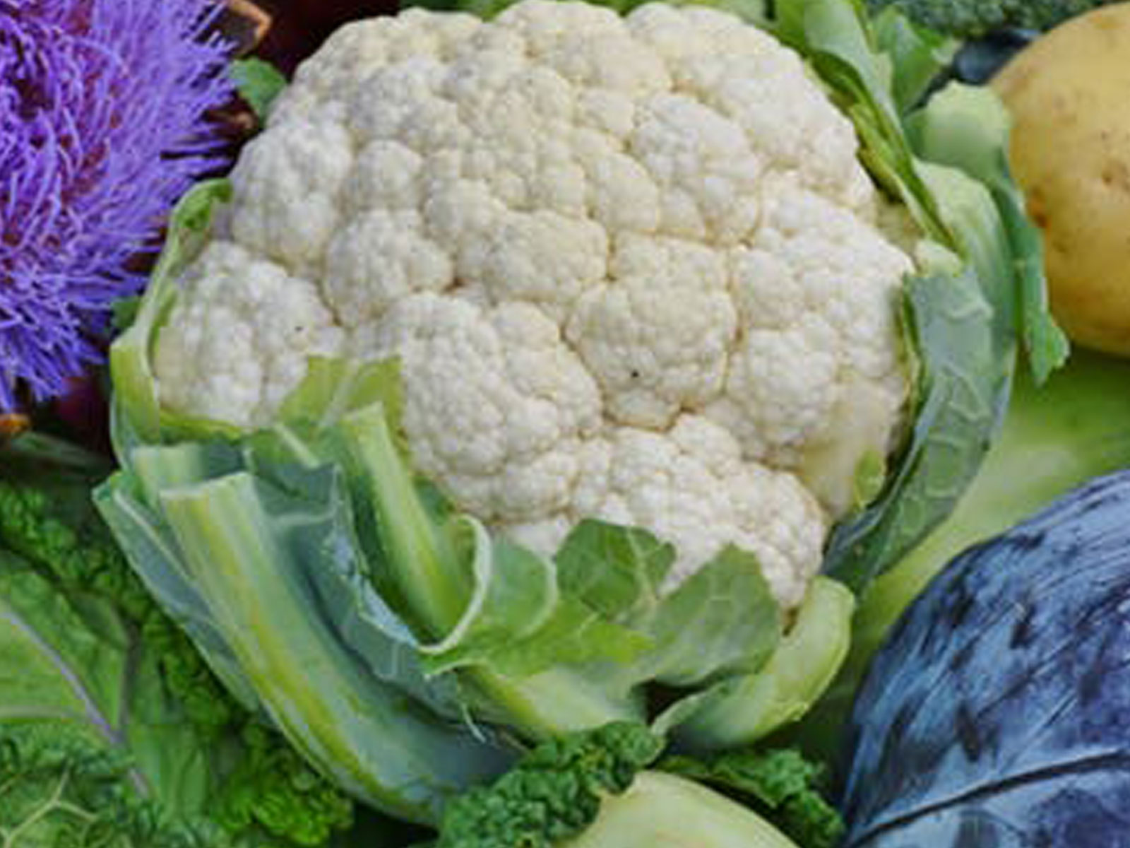 cauliflower fresh